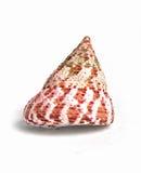 Coquille de coque rouge Image libre de droits