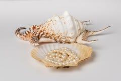 Coquille de couronne du ` s de roi et coquille de perle Image stock