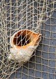 Coquille de Gener en filet de pêche photo photos libres de droits