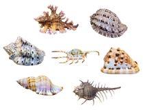 Coquille de groupe d'escargot de mer Photo libre de droits