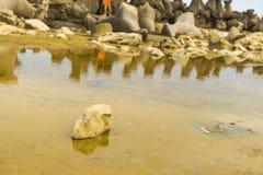 Coquille de la Mer Noire Image libre de droits