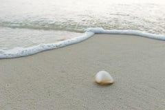 Coquille de mer à la plage Image stock