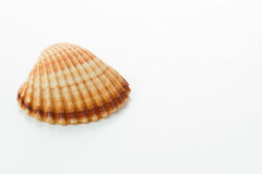 Coquille de mer Photographie stock libre de droits