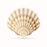 Coquille de mer Photo stock