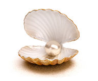 Coquille de mer avec la perle image stock
