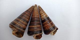 Coquille de mer avec outre du papier peint texturisé blanc de fond, photographie stock libre de droits