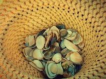 Coquille de mer dans le chapeau Photographie stock