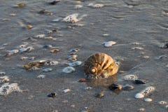 Coquille de mer dans les vagues Photographie stock libre de droits