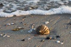 Coquille de mer dans les vagues Image stock