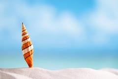 Coquille de mer de clown avec l'océan, la plage et le paysage marin Photos stock