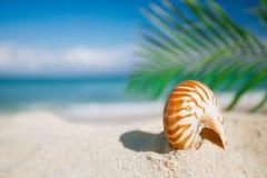 Coquille de mer de Nautilus sur la plage chaude de sable Photos libres de droits