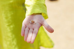 Coquille de mer sur la main de la fille Image libre de droits