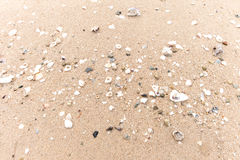 Coquille de mer sur la plage Photographie stock