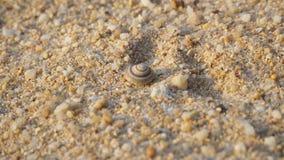 Coquille de mer sur le sable brut photo stock