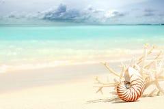 Coquille de Nautilus Image libre de droits