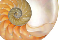 Coquille de Nautilus Photos stock