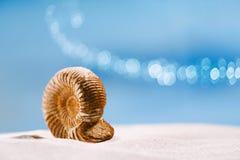 Coquille de nautilus d'ammonite sur le sable blanc de plage Photo stock