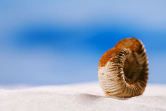 Coquille de nautilus d'ammonite sur le sable blanc de plage Photos stock