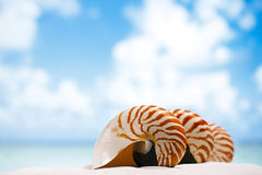 Coquille de Nautilus sur le sable blanc de plage de la Floride sous la lumière du soleil Photos libres de droits