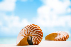 Coquille de Nautilus sur le sable blanc de plage de la Floride sous la lumière du soleil Images libres de droits