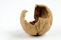 Coquille de noix Photographie stock
