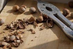 Coquille de noix Images stock