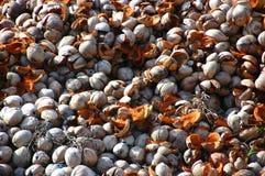 Coquille de noix de coco Photographie stock libre de droits