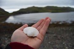 Coquille de palourde trouvée sur les Îles Shetland Photos stock
