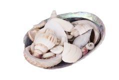 Coquille de Paua remplie de coquilles de mer Photos stock