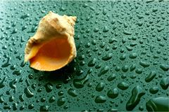 Coquille de Shell sur une table humide, foyer sélectif dans le premier plan avec l'espace de copie Coquille de Sandy et de mer photos libres de droits