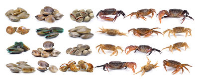 Coquille de venus de crabe et d'émail, mollusques et crustacés de palourde, palourde de ressac, moule, Image libre de droits