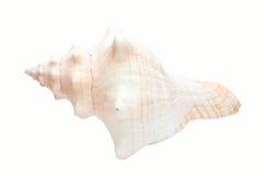 Coquille en spirale blanche Images libres de droits