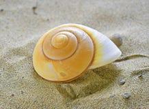 Coquille en spirale de mer Photographie stock