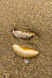 Coquille en spirale sur le sable Photos libres de droits