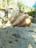 Coquille géante par la plage photographie stock libre de droits