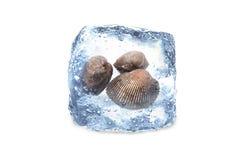 Coquille gelée, glace Images libres de droits