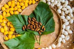 Coquille jaune de cocon de ver à soie par l'itinéraire en soie Image libre de droits