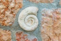 Coquille préhistorique fossile antique utilisé dans les éléments intérieurs Images stock