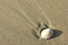 Coquille simple sur le sable Photographie stock libre de droits