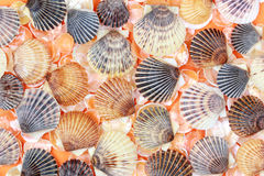 Coquilles Images stock