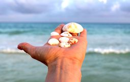 Coquilles blanches dans le coucher du soleil Image stock