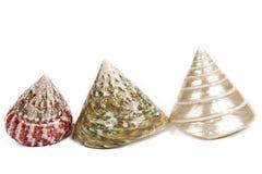 Coquilles colorées de mer d'isolement sur le blanc Photographie stock