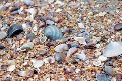 Coquilles colorées de mer sur la plage Images libres de droits