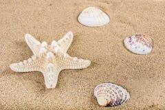 Coquilles d'étoiles de mer et de mer sur le sable de plage Photos libres de droits