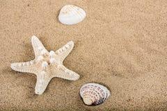 Coquilles d'étoiles de mer et de mer sur le sable de plage avec l'espace vide Photos libres de droits