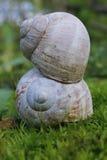 Coquilles d'escargot Photos stock