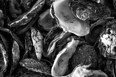 Coquilles d'huître Images stock