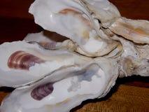Coquilles d'huître coincées ensemble Image stock