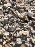 Coquilles d'océan dans un soleil du sud photo libre de droits