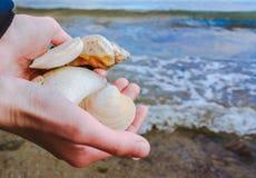Coquilles dans des mains à la personne dans la perspective de la mer photos stock